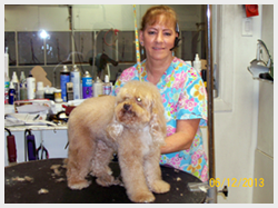 pats pedigree dog grooming pet grooming services