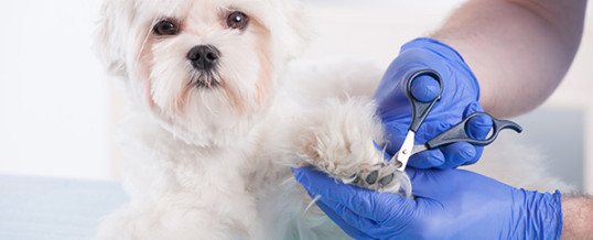 Pet Grooming Dog Grooming Services